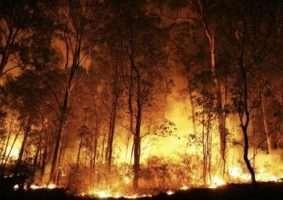 Floresta Amazônica sofre com as queimadas nos últimos dias e mobiliza o mundo. Foto - Divulgação